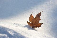 Hoja en nieve Imagen de archivo libre de regalías