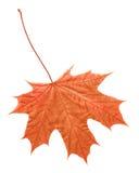 Hoja en otoño Imagen de archivo libre de regalías
