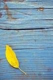 Hoja en piso de madera Foto de archivo