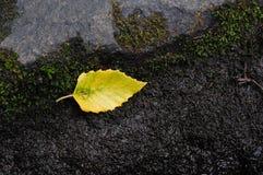 Hoja en roca Imagen de archivo