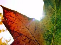 Hoja en sol Fotografía de archivo libre de regalías