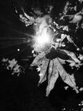 Hoja en un árbol Imagenes de archivo