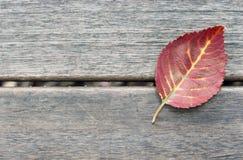 Hoja en un fondo de madera, textura, fondo, espacio de la copia, minimalismo de Autumn Red imágenes de archivo libres de regalías