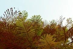 Hoja en un fondo del cielo Imagen de archivo libre de regalías