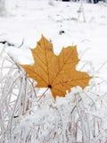 Hoja encendido a la nieve Foto de archivo libre de regalías