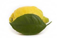 Hoja entera del limón con descensos Imagen de archivo libre de regalías