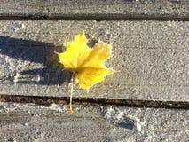 Hoja escarchada amarilla Imagen de archivo libre de regalías