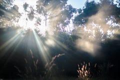 Hoja espectacular de la luz natural Foto de archivo