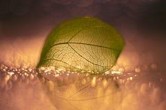 Hoja esquelética transparente con el bokeh en un fondo hermoso Foco selectivo Foto de archivo libre de regalías