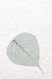 Hoja esquelética verde Foto de archivo libre de regalías
