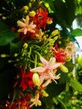 Hoja floral rosada de la planta Imágenes de archivo libres de regalías