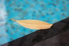 Hoja flotante en la piscina con agua azul El verano pide una rotura por la piscina y la relajación cerca de una piscina o de un b imagen de archivo libre de regalías
