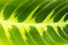 Hoja - fondo Imagen de archivo libre de regalías