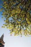 Hoja formada con el fondo de la pagoda Fotografía de archivo