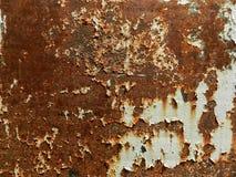 hoja fosilizada en la piedra Imágenes de archivo libres de regalías