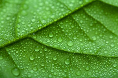 Hoja fresca con gotas del agua Imagen de archivo libre de regalías