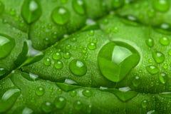 Hoja fresca con las gotitas de agua Foto de archivo
