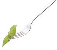 Hoja fresca de la albahaca en la bifurcación aislada en el recorte blanco del fondo. H foto de archivo