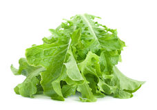 Hoja fresca de la ensalada verde de la lechuga Imágenes de archivo libres de regalías
