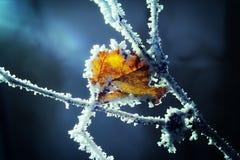 Hoja helada en invierno Fotos de archivo