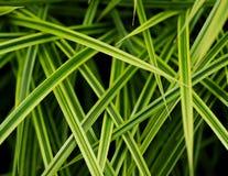 Hoja herbosa Imagen de archivo libre de regalías