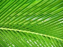 Hoja hermosa de la palmera Fotografía de archivo libre de regalías