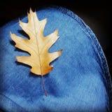 Hoja hermosa del otoño Fotografía de archivo