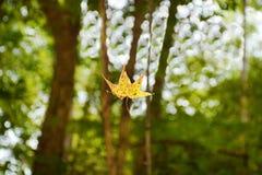 Hoja hermosa del otoño que cae del árbol en el bosque Foto de archivo libre de regalías