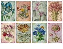 Hoja imprimible de la etiqueta - artista floral Trading Cards del ejemplo del vintage - ATC - etiquetas imprimibles del regalo stock de ilustración