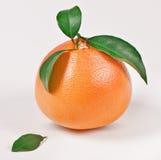 Hoja madura del verde del whith del pomelo Imagen de archivo