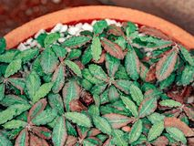 Hoja mojada del cactus en vaina anaranjada grande imagen de archivo