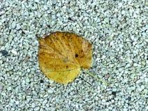 Hoja mojada del otoño en los pequeños guijarros Foto de archivo libre de regalías
