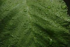 Hoja mojada verde Imagen de archivo