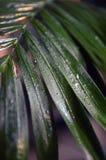 Hoja mojada verde en el parque imagen de archivo libre de regalías