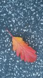 Hoja multicolora imagenes de archivo