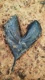 Hoja negra del corazón Fotos de archivo