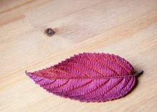 Hoja otoñal en fondo de madera. Imagen de archivo libre de regalías
