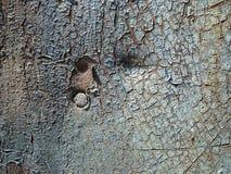 Hoja oxidada vieja del hierro Imágenes de archivo libres de regalías