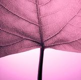 Hoja púrpura Fotografía de archivo libre de regalías