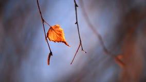 Hoja pasada del abedul en bosque del otoño Foto de archivo libre de regalías