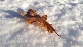 Hoja pasada en la nieve Fotografía de archivo