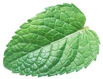 Hoja perfecta de la menta verde u hoja de la menta aislada en el fondo blanco foto de archivo