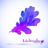 Hoja pintada acuarela púrpura del roble del vector Fotos de archivo
