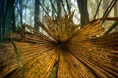 Hoja putrefacta vieja del palmtree en selva Fotos de archivo