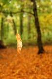 Hoja que cae en bosque   Imagenes de archivo