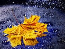 Hoja que flota en el agua con lluvia. Imagen de archivo