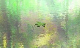 Hoja que flota en la opinión tranquila del agua imagenes de archivo