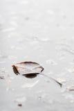 Hoja que flota en la superficie del agua - imagen común del otoño Foto de archivo libre de regalías