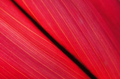 Hoja roja Imágenes de archivo libres de regalías