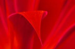 Hoja roja Fotos de archivo